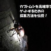 カブトムシの採集方法