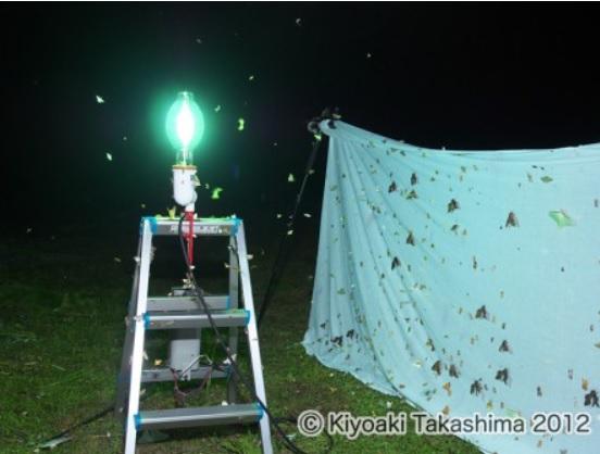 灯火採集法の様子