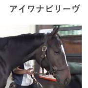 アイワナビリーヴの馬体